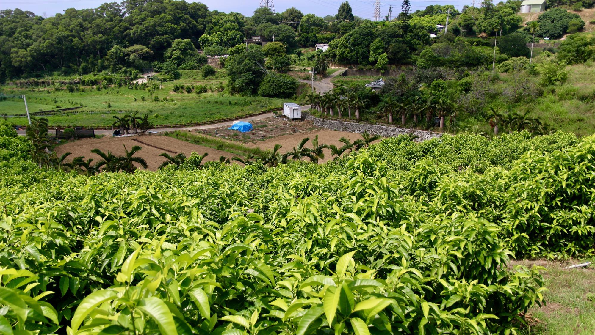 玉蘭花園.jpg